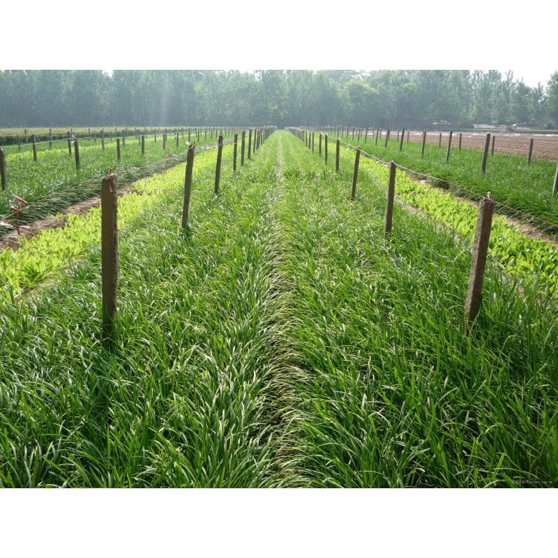 种子-太空棚绿大棚蔬菜种植技术-大棚蔬菜种子,种苗批发,蔬菜大