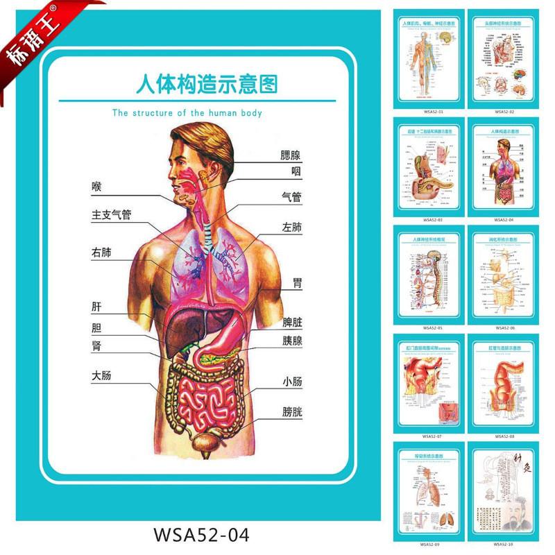 医院科室挂图解剖图海报,人体结构示意图宣传画墙贴画wsa52