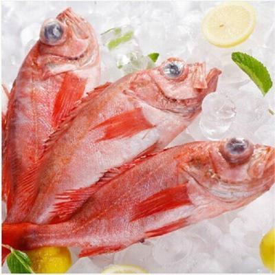 【嘉特博】冰岛进口顶级野生红石斑鱼 冰岛红鱼 孕妇宝宝推荐 500g