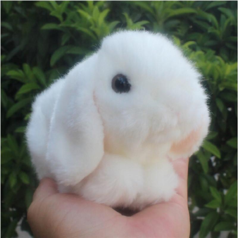 兔子大蒜狗狗狗动物800_800蜗牛配壁纸图片