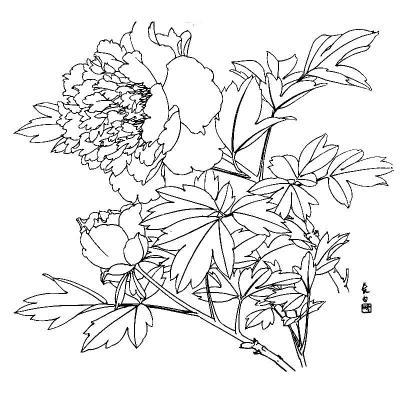 国画水墨画工笔画绘画技法教程书籍 花卉写生构图上下全套两册 鸟禽