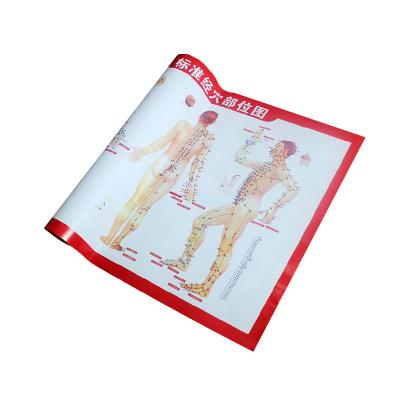 可孚穴位图中医养生保健穴位指导标准人体穴位图大挂图 全身穴位经络图经穴部位图刮痧艾灸图