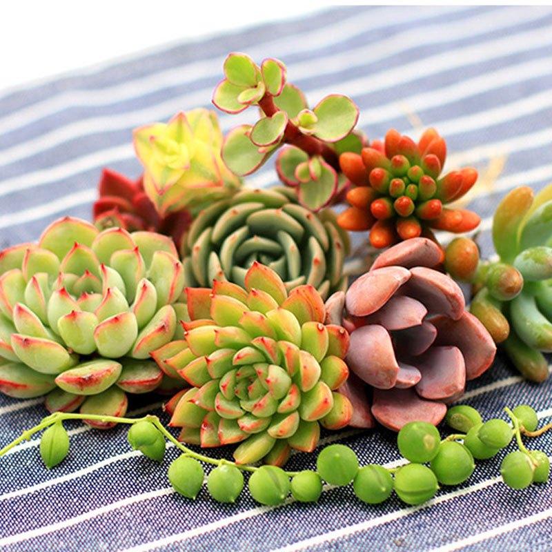【6顆多肉套餐】多肉植物組合盆栽綠植花卉辦公室室內