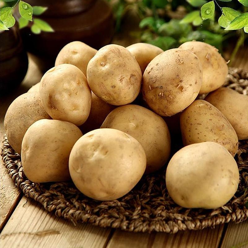 很老的粗��_恩施特产 高山粗皮黄心小土豆2500g 农家自种 富硒土豆老品种洋芋硒