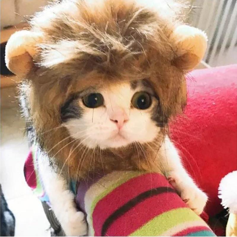 猫咪狮子头套搞笑宠物装扮耳朵帽子狗狗猫猫可爱搞笑头饰发饰